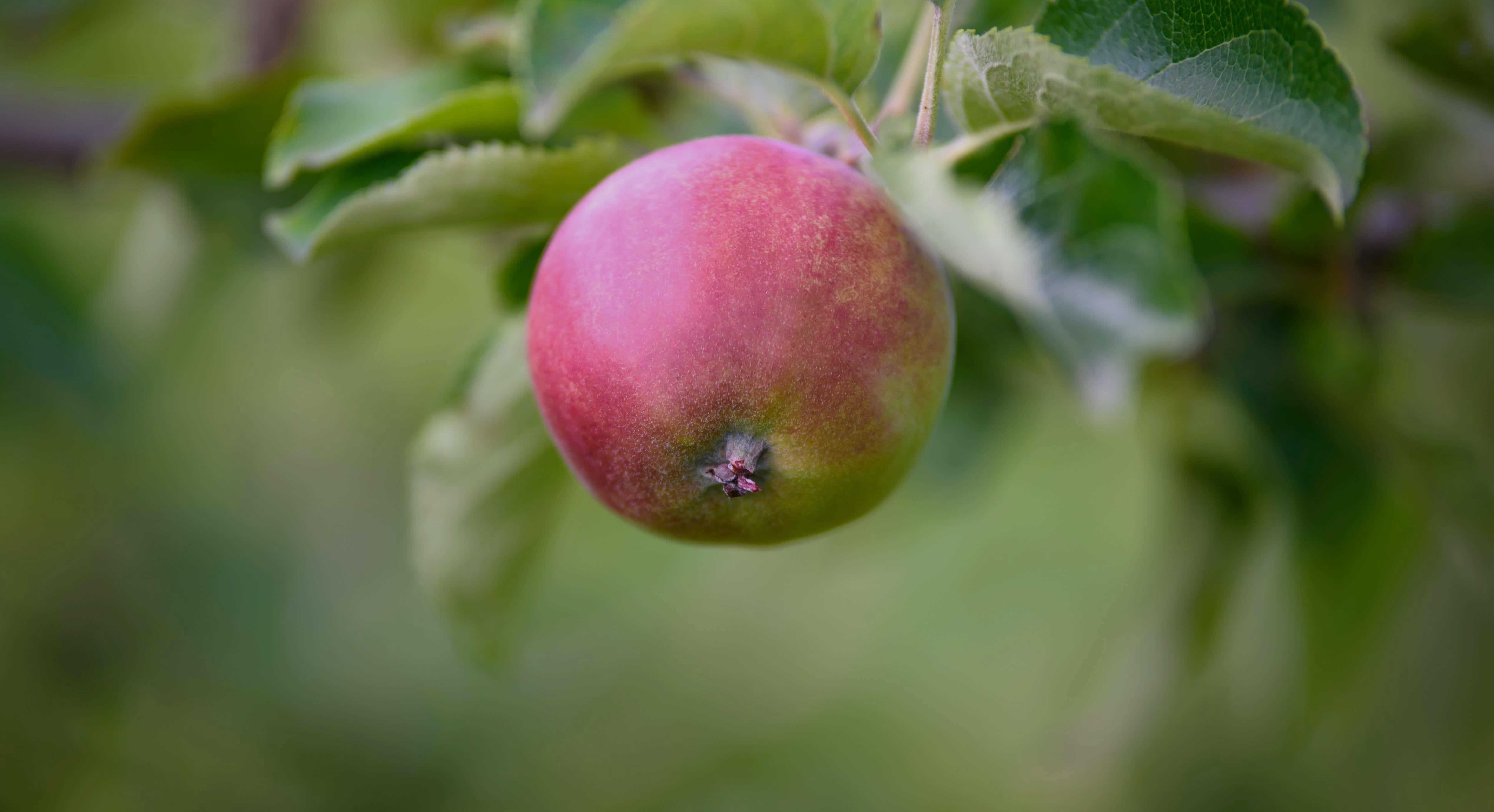 Bo Radyn Big apple